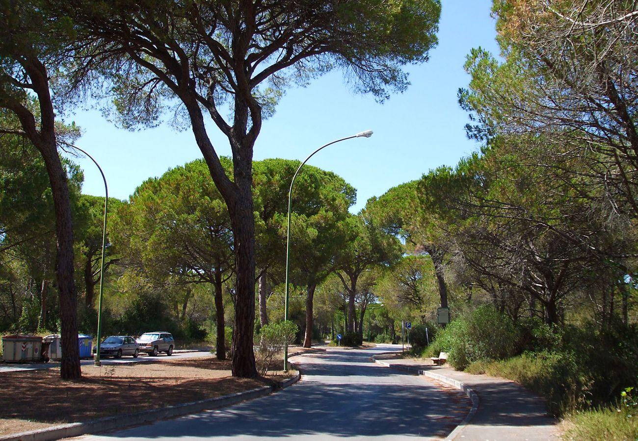 Marina di Grosseto - Les longues avenues ombragées par les pins