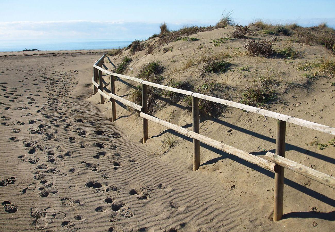 Sandy beaches of Maremma